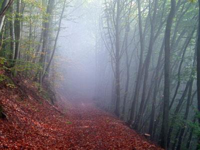 خبر سفری رویایی به جنگل الیمستان