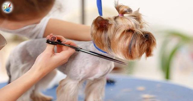 نمایشگاه نمایشگاه مراقبت از سگ در تایلند