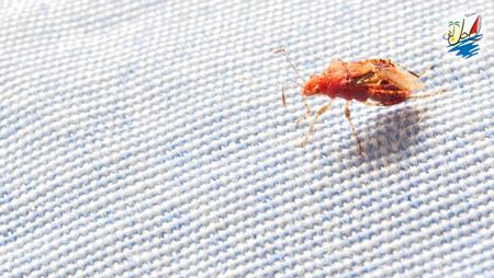 خبر در سفر مراقب حشرات باشید