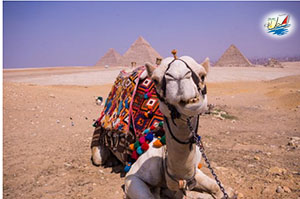 خبر راهنمای سفر به قاهره