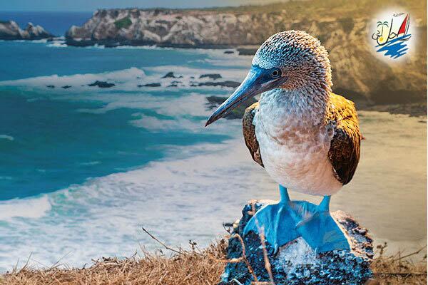 خبر Celebrity Cruises شروع سفرها به  گالاپاگوس را  از سال  2023 اعلام کرد.
