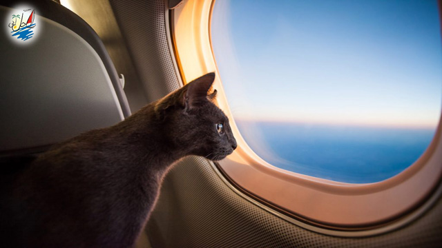 خبر 9 ایرلاین امن برای سفر با حیوانات اهلی