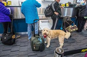 خبر سفر با حیوانات خانگی